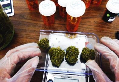 Se debate en Senado la legalización del uso medicinal de aceite de marihuana