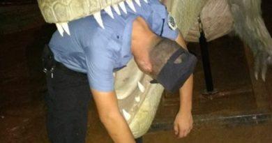 Policías en servicio juegan y se sacan selfies con los dinosaurios de Tecnópolis