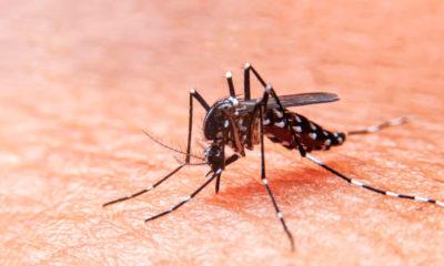 Paraguay registró más de 1.000 notificaciones por dengue y confirmó 10 casos