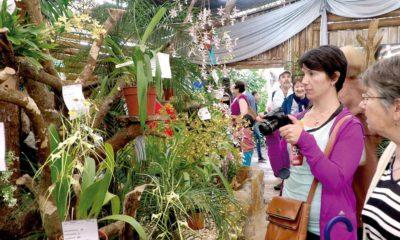 Montecarlo: pedirán carnet de vacunación para entrar a las fiestas de la Orquídea y la Flor