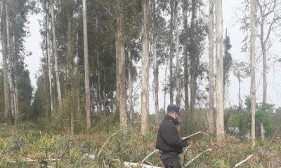 Murió aplastado por un tronco de eucalipto en Garuhapé-Mí