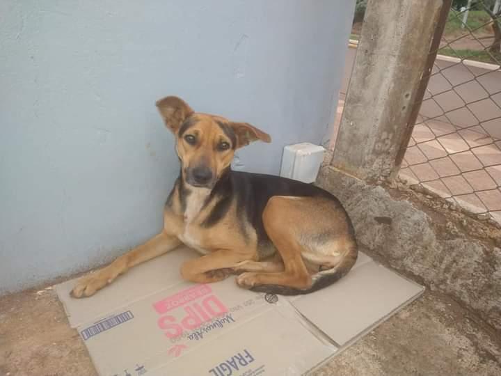 Perrita abandonada espera por su dueño en el estacionamiento de Changomas