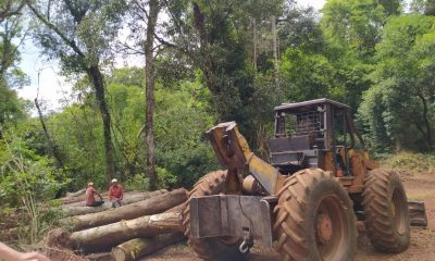 Fundación de Pérez Esquivel desmiente a Ecología por apeo en Yabotí Mirí