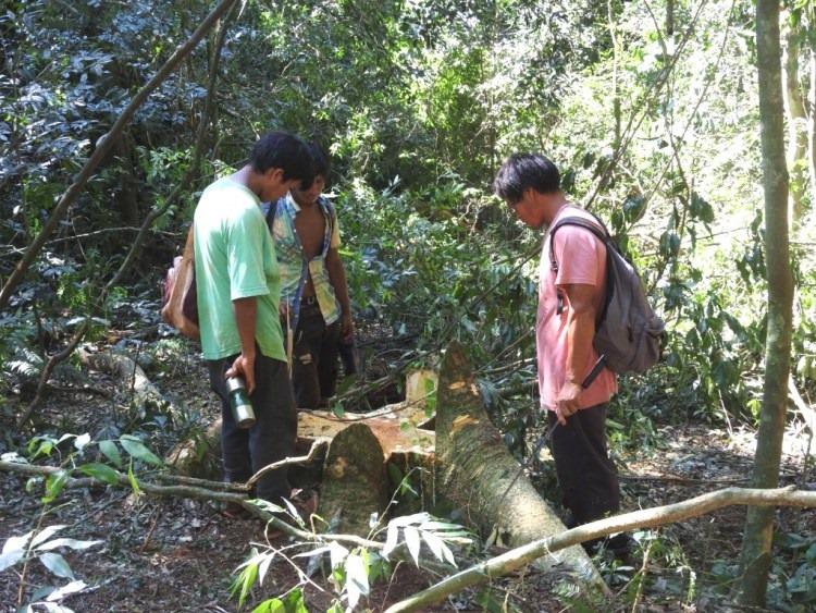 La Justicia frena tala de árboles en territorio de la comunidad Ka'a Kupe