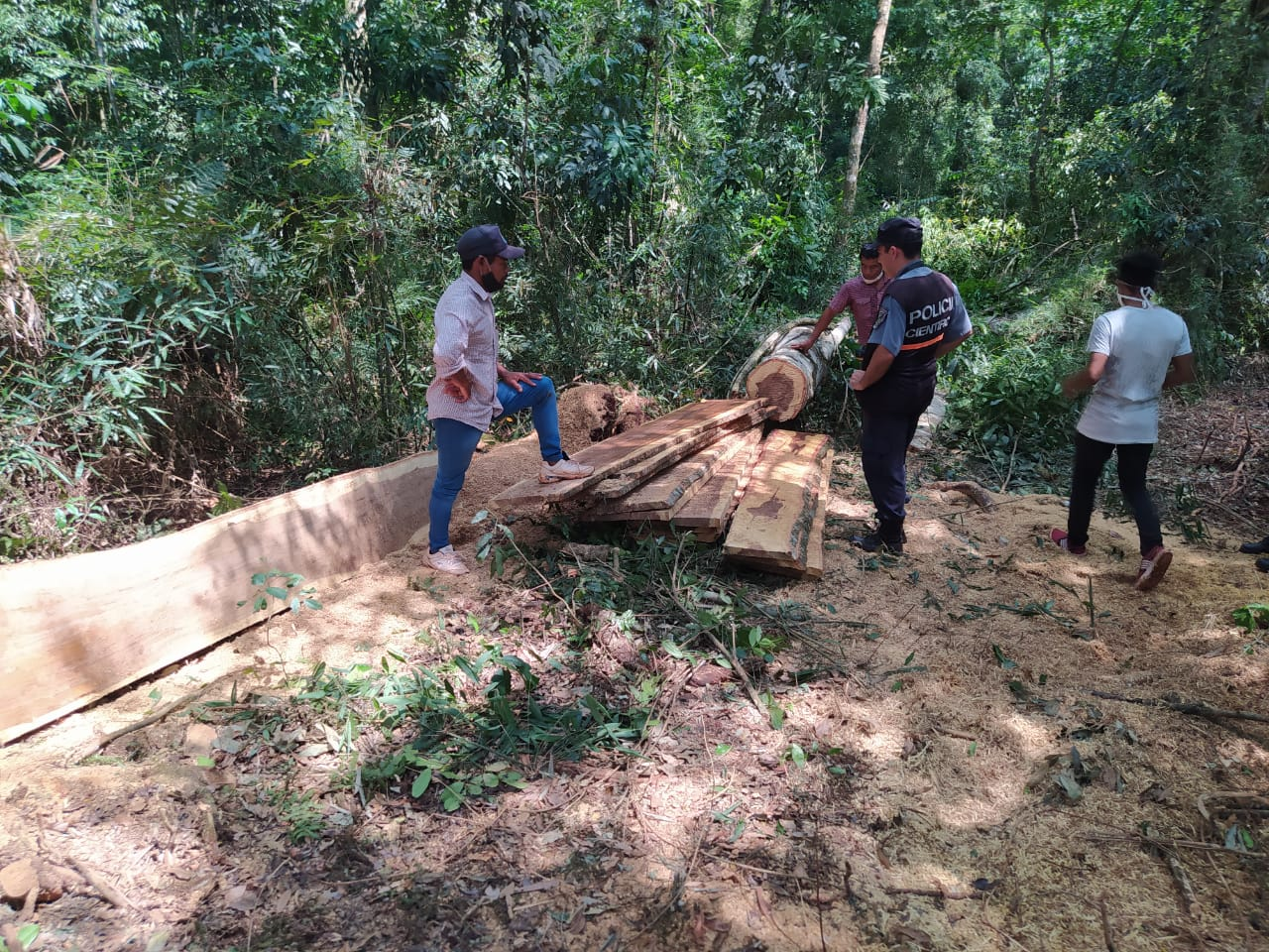 Denuncian corte y robo de madera nativa en comunidad Tajy Poty