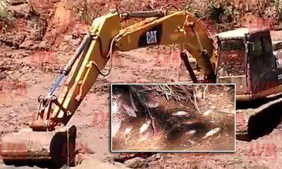 Empresario de Liniers desvió un arroyo y causó mortandad de peces
