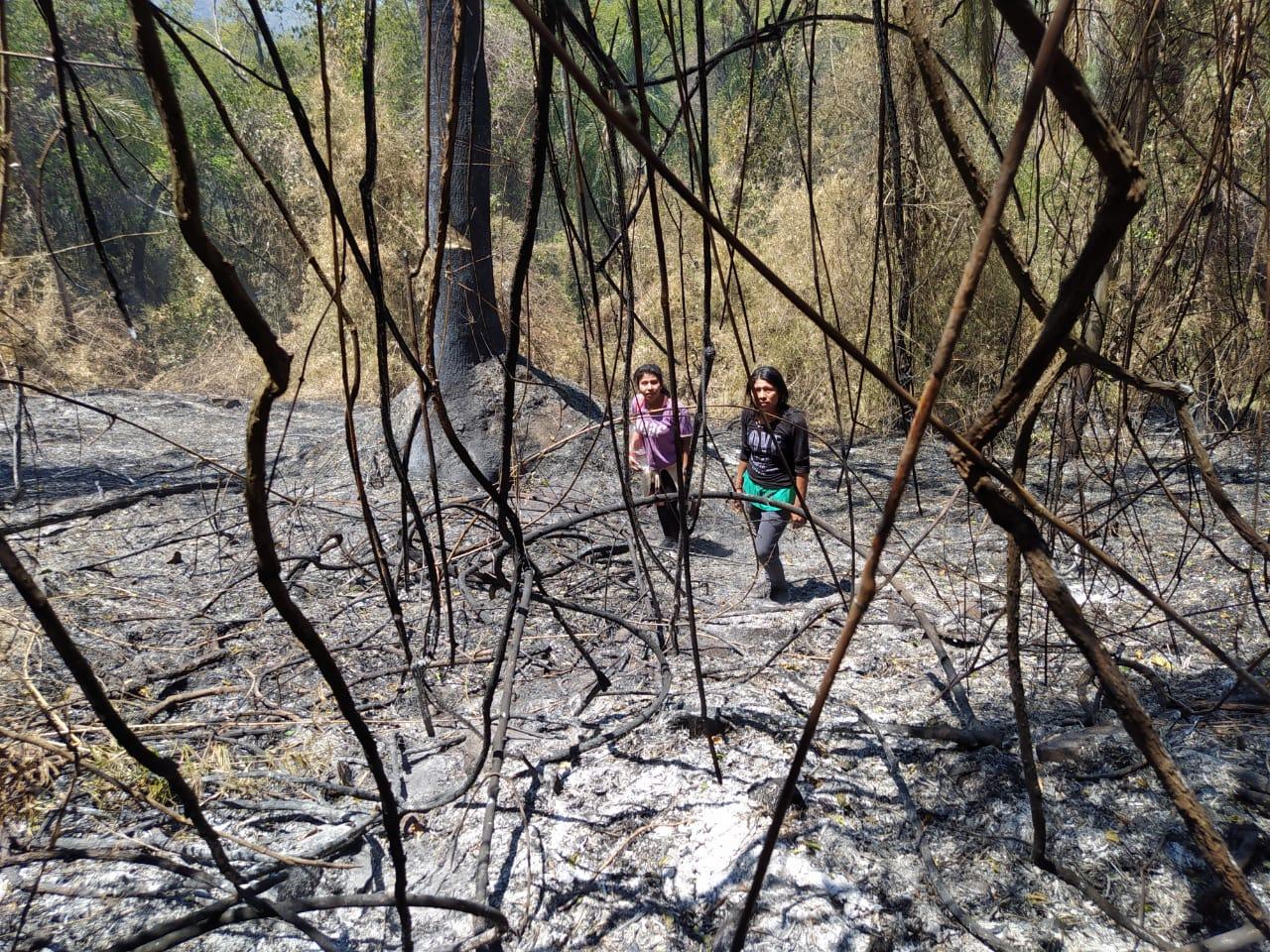 Se incendia bosque nativo de la comunidad Ka'a Kupe en el Cuñá Pirú