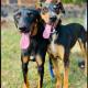 Tras cinco meses de recuperación, Mona y Lisa están listas para ser adoptadas