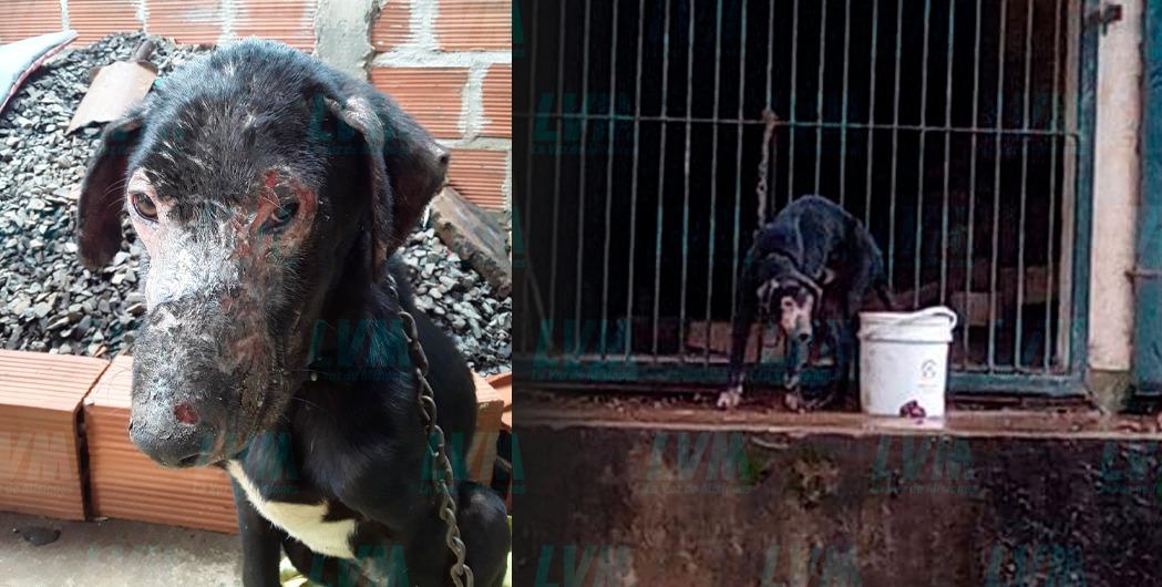 Rescatan a perrito de 1 año que vivía encadenado en Posadas