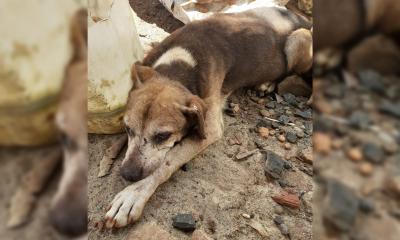 Salvaron a 100 mascotas y para costear su recuperación lanzaron una rifa