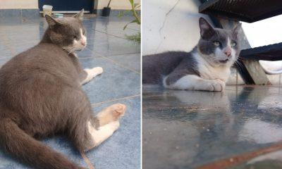 """Gatito rescatado busca familia: """"No está gordito, está relleno de ternura"""""""