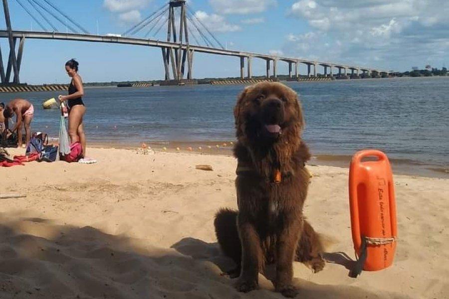 Corrientes incorporó a sus playas un perro que salva vidas