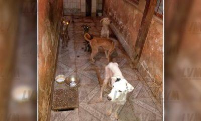 Allanan la casa de una empleada municipal y rescatan 25 perros moribundos