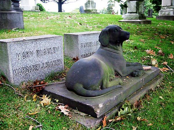 Concejal posadeño propuso crear un cementerio de mascotas