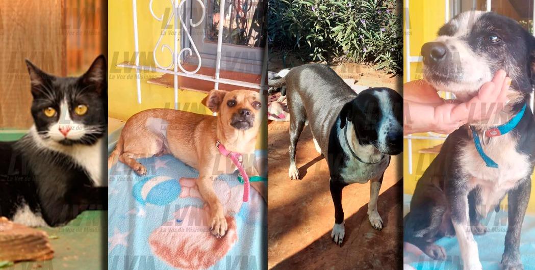Rescatistas lanzan rifa para costear alimento y salud de 30 mascotas