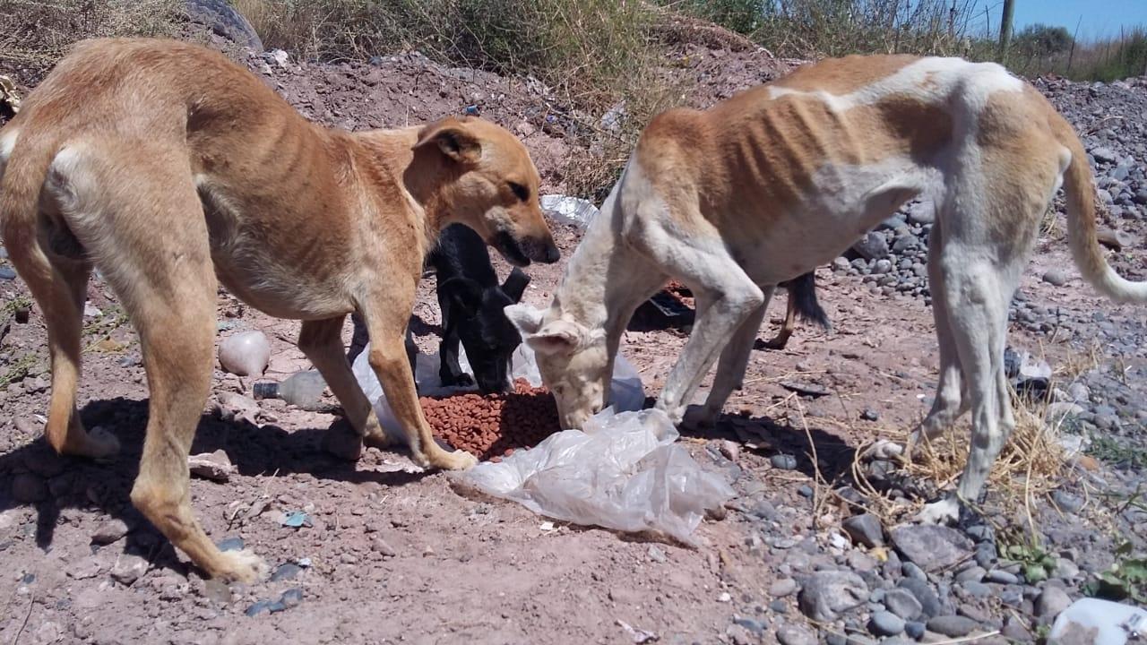 Posadas: junta recipientes para dar agua y comida a perros de la calle