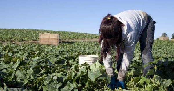 Lanzan crédito de hasta 3 millones de pesos para pequeños productores