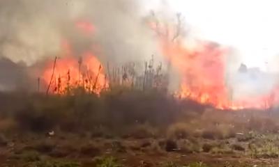 Se incendiaron 4 hectáreas en la aldea Fortín Mbororé de Puerto Iguazú