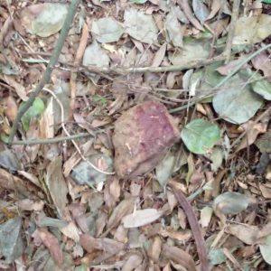 Una de las piedras usadas por el supuesto agresor contra el animalito.