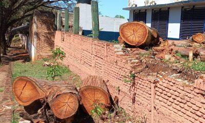 """Cortan un eucalipto de más de 40 años: """"Lo talaron los del Colegio Janssen"""""""