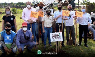 Yacyretá plantó 60.000 árboles de especies nativas en Posadas y Garupá