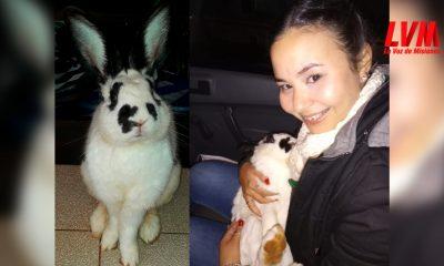 En la casa de la vecina, hallaron al conejo King desaparecido desde el lunes