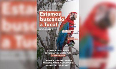 Buscan a guacamayo rojo casi extinto que se perdió en Corrientes
