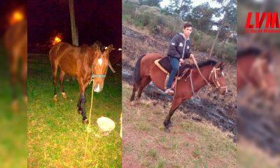 robaron su caballo